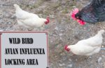 Avian-influenza-Asia-Europe