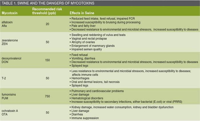 dangers of mycotoxins to pigs