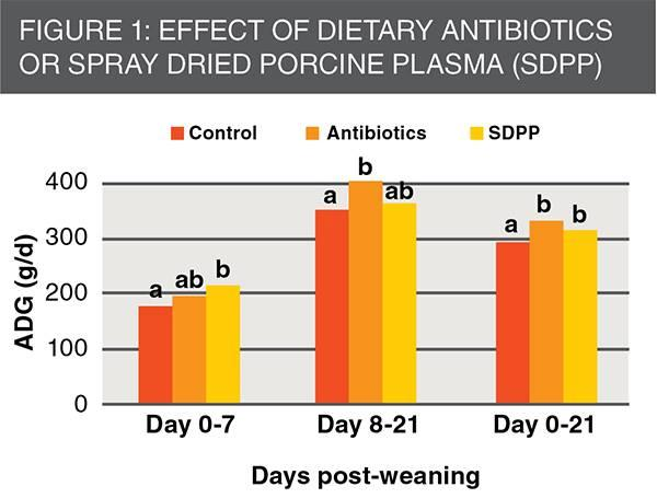 effect of dietary antibiotics or SDPP of piglets