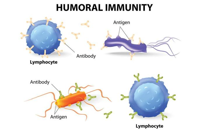 humoral immunity in pig gut health