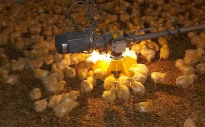 Roxell LED light for control unit broiler feeding systems