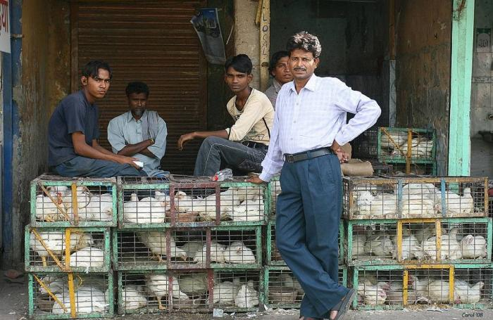 chickens-india.jpg