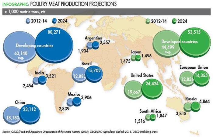 Poultry meat production projections infographic