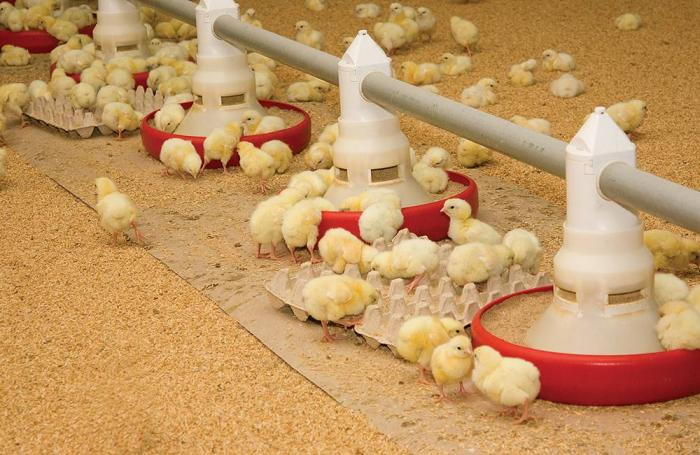 GFSI: What the animal feed industry needs to know | WATTAgNet
