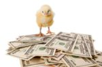 chick-on-money