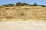 corn silage for dairy cattle