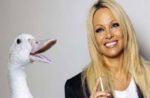 pam-anderson-with-bird