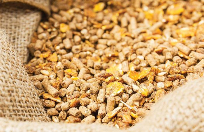 How animal feed enzymes can improve producer profitability