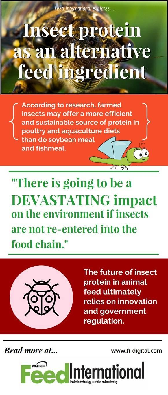 insect protein as feed