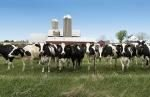 dairy-cow-metabolic-disorders