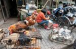 china poultry