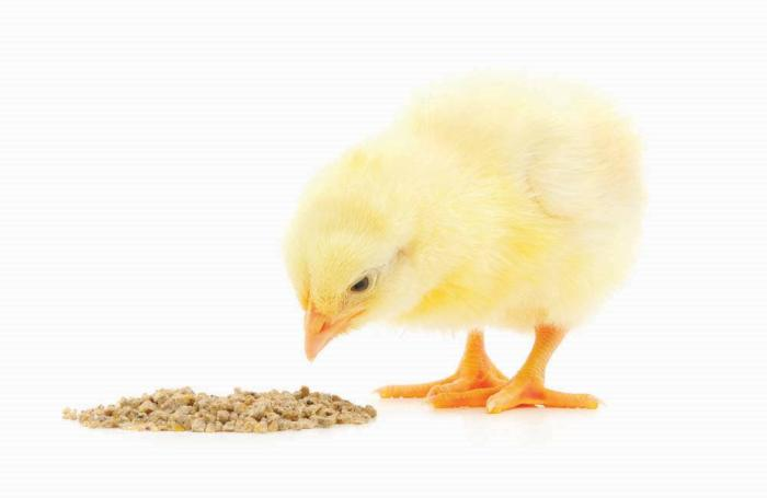 Poultry Investment To Boost Food Security In Oman Wattagnet