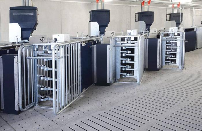 electronic sow feeders cost