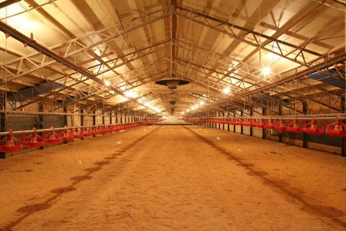 how to protect poultry flocks from darkling beetles poultry house roof insulation Commercial Poultry Houses