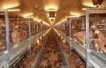 Hellmann Poultry Systems Pro 11 layer aviary