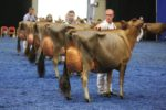 world dairy expo cattle show