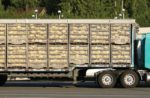 Broiler-chickens-in-transport-coops