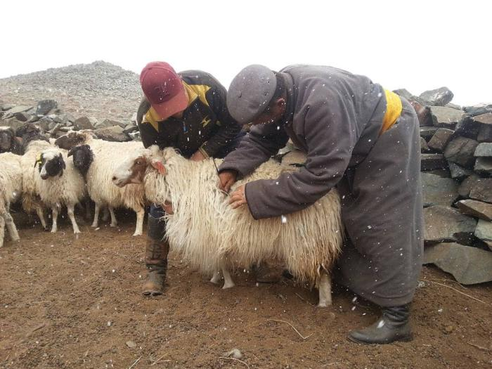 Mongolian-farmers-manages-herd-1607Mongolia1.jpg