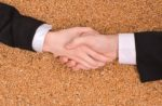 Business handshake over wheat grains