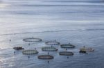 Aerial shot of an aquaculture fish farm