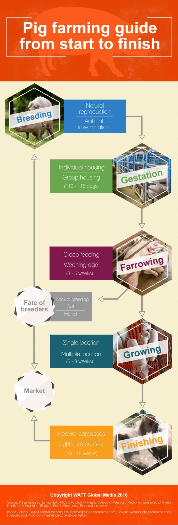 Pig-farming-guide-from-start-to-finish_.INFOGRAPHIC