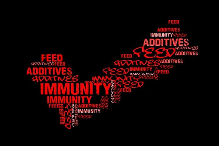 Feed-additives-immunity-word-mosaic-1601