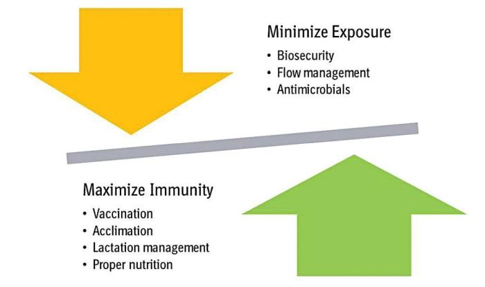 disease management equation