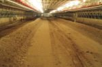 windrow-composting-poultry-litter.jpg