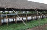 chicken-house-in-rural-Southeast-Asia-1.jpg