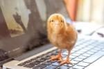 chick-on-laptop