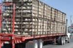 broilers-in-transport-cages