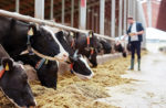 enzymes in dairy feed