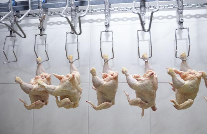 improve the jobs in a chicken processing plant 1how relevant are the concepts of competencies to the jobs in a chicken-processing plant 1how relevant are the concepts of competencies to the jobs in a chicken-processing plant hirsagar had been with horizon for over twenty years.