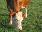 ruminant trace mineral profiling