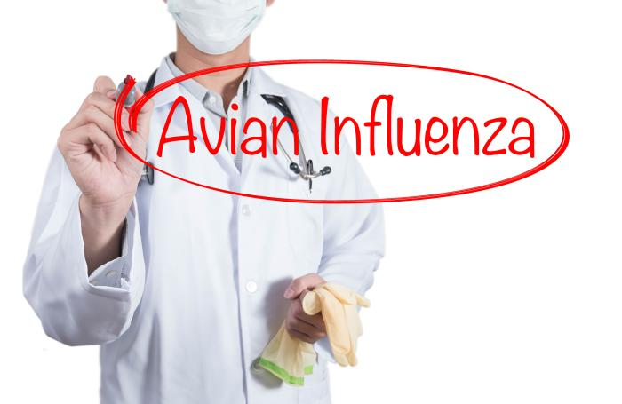 avian-flu-Korea