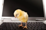 Chicken-and-computer