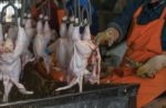 Poultry-evisceration-1.jpg