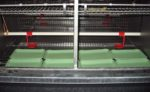 fiber trays in chicken cage