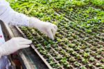 bioengineered-gmo-plants-seedlings.jpg