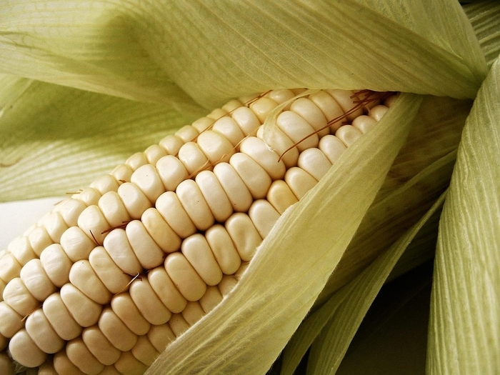 Corn shortage pushes up Kenyan animal feed prices | WATTAgNet