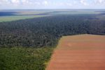 rainforest-soy-deforestation.jpg