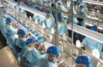 Chicken_Production_Line_NCC
