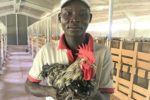 Hendrix-Sustainable-Chicken-Africa