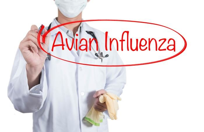 Poland registers first avian flu outbreak of the winters