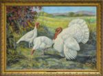 White-Holland-Turkeys-Print