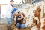 antibiotic-free-livestock-production-europe.jpg