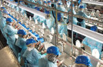 chicken-processing-poultry-workers