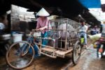 China-pigs-biosecurity-african-swine-fever.jpg