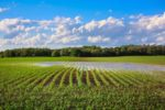 flood-corn-field.jpg