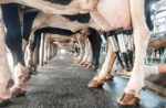 milk-production-dairy-nutrition.jpg